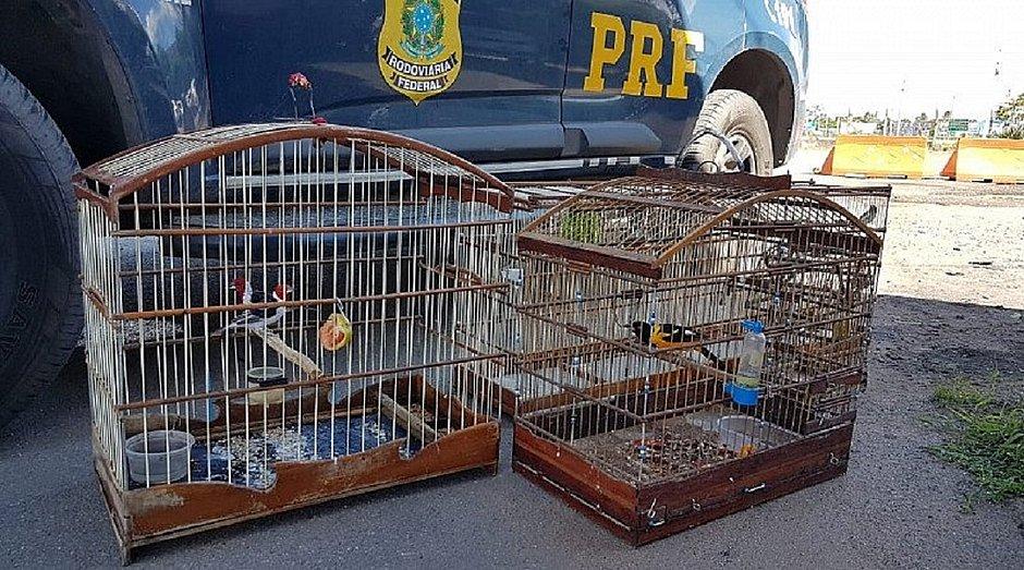 Operação apreende 42 aves silvestres e três pássaros exóticos na Bahia