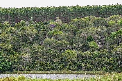 Produção florestal cresce na Bahia, mas gera menos valor