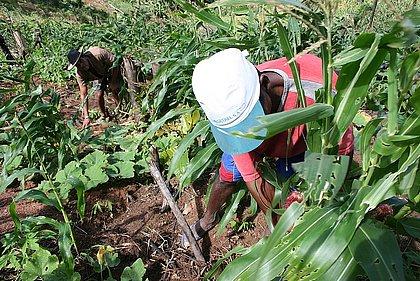 Só agricultura contratou mais que demitiu em 2020 na Bahia