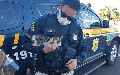 Policial flagra gatinho sendo arremessado de carro, autua motorista e adota filhote