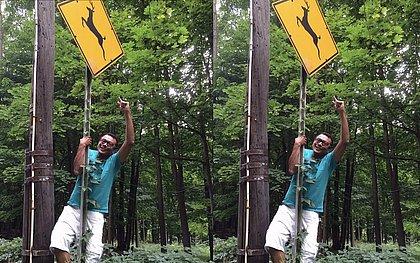 Cuidado, veado na pista: as peripécias de Marrom no caminho para Woodstock