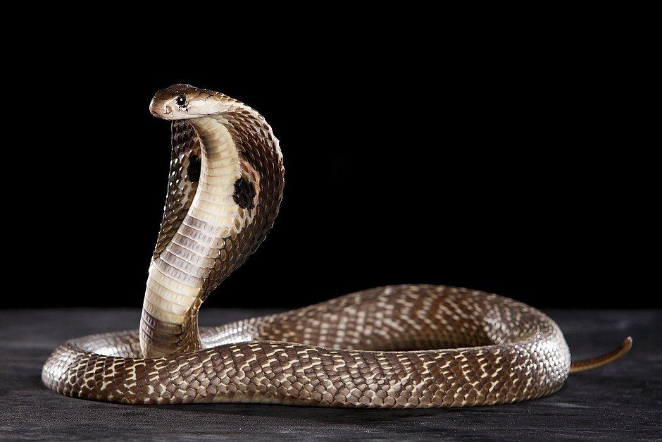 Jovem vive 'terror' após ser picado 8 vezes pela mesma cobra em 1 mês