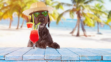 Verão está chegando e exige cuidados especiais com os pets