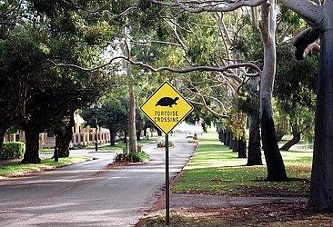 Também é possível que uma tartaruga atravesse a pista na Austrália