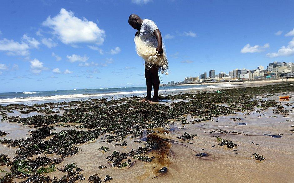 Óleo no Nordeste: Ufba aponta presença da substância em peixes e mariscos