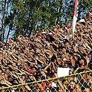 Torcedores do Vitória já podem comprar ingressos para o jogo contra o Criciúma