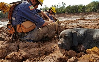Cão que ajudou em resgates de Brumadinho morre durante busca