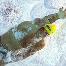 Bruno Fratus avança à final dos 50m livre No Mundial de esportes aquáticos