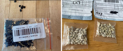 Bahia emite alerta sobre sementes misteriosas em encomendas da China