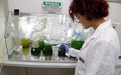 Projeto premiado: estudantes do SESI criaram uma solução para o uso de fertilizantes e agrotóxicos na agricultura