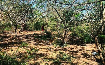 Grupo estava em matagal