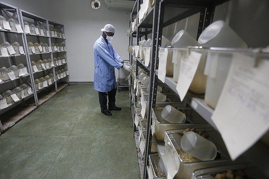 Coronavírus: Lacen dobrará capacidade de 300 para 600 testes por dia