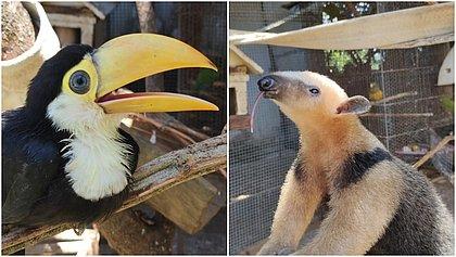 Na pandemia, rotina dos animais no Zoo de Salvador continuou igual