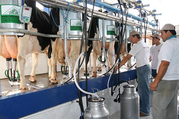 Produção baiana de leite cresce e atinge melhor resultado desde 1997