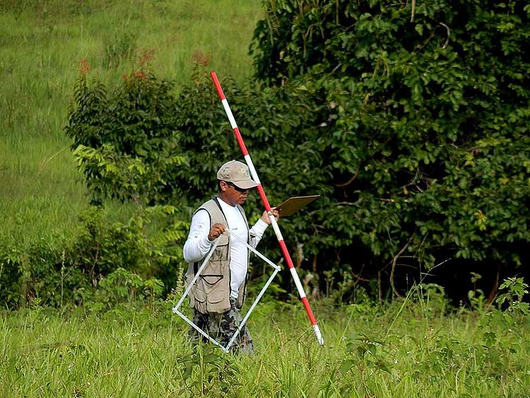 Pesquisa para o Inventário Florestal Brasileiro avança na Amazônia