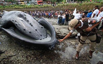 Curiosidade para saber como é a baleia