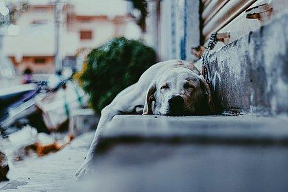 No mundo, são mais de 600 milhões de animais abandonados