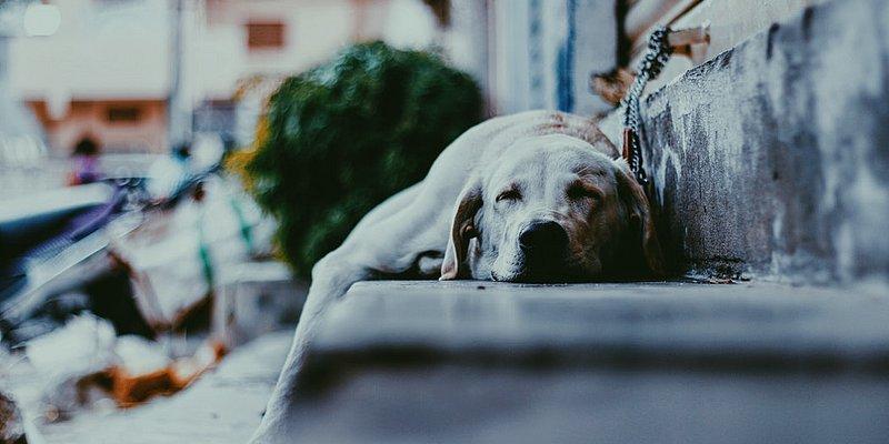 Holanda é o primeiro país a não ter mais cachorros abandonados nas ruas