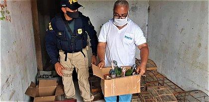 Centenas de aves silvestres e galos são resgatados em operação no Sul da Bahia