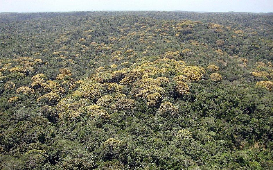 Áreas de preservação ambiental da Bracell na Bahia abrigam 1.228 nascentes de rios