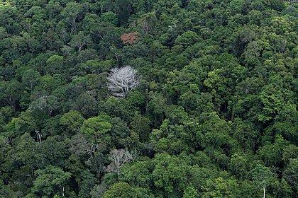 Emissões de gases do efeito estufa crescem no Brasil
