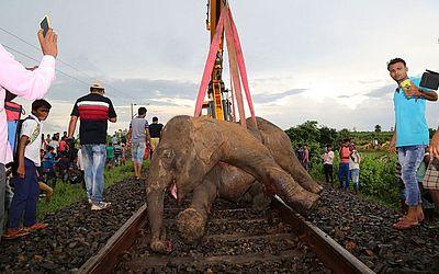 Um elefante morto é levantado por uma escavadeira, após ser atropela por um trem super-rápido enquanto a manada atravessava a ferrovia no trecho entre Kanimohali e Giva, em Bengala.
