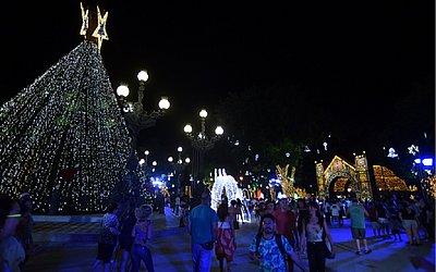 Tree 23 meters tall