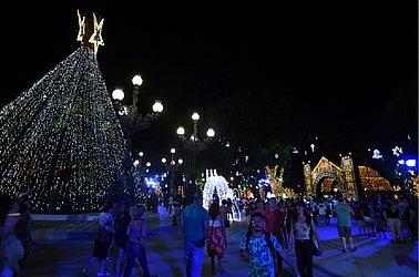 Árvore de 23 metros de altura