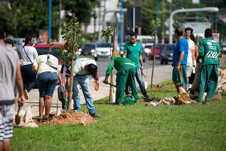 Canteiro central do Imbuí ganhou 45 árvores da Mata Atlântica