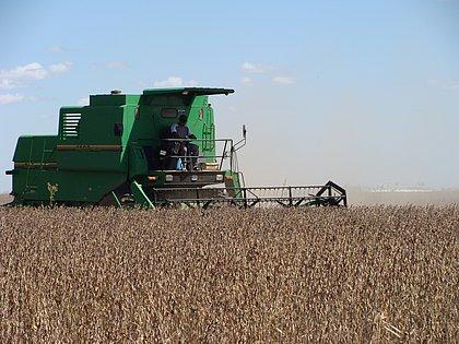 Prognóstico para a safra de grãos em 2021 prevê aumentos na produção de soja e feijão