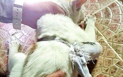 Gato 'traficante' é preso tentando entrar em presídio com drogas