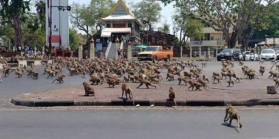 Coronavírus faz gangues de macacos famintos travarem guerra na Tailândia; vídeo