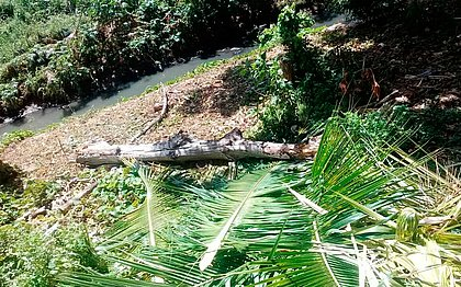 Empresa é autuada por poda ilegal de árvores no Caminho das Árvores