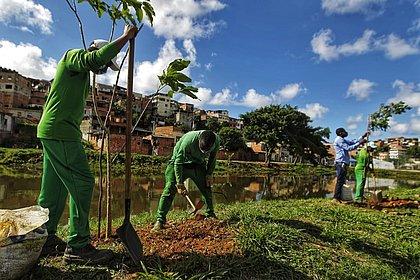 Salvador mais verde: Dique do Cabrito ganha 500 árvores em ação da prefeitura