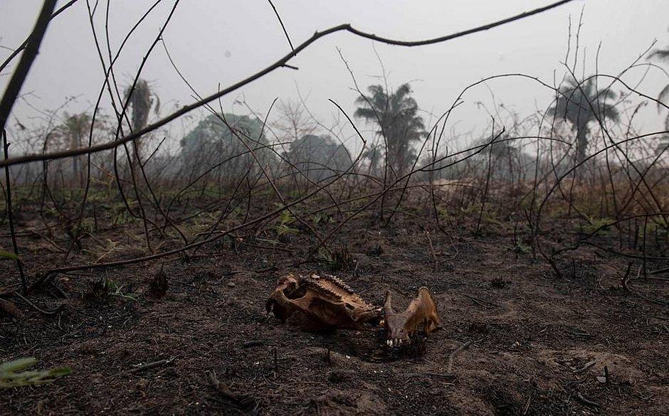 Em diligência no Pantanal, senadores dizem que cenário é devastador