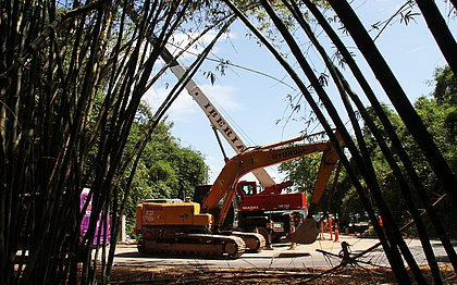 Após poda, obra em bambuzal do aeroporto é suspensa; empresa foi multada