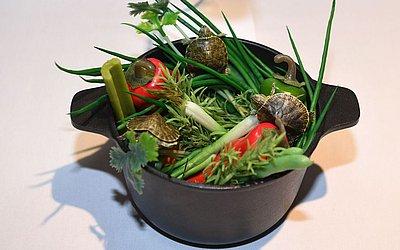 A sopa de tartaruga da China é apresentada no Museu de alimento nojento em Los Angeles, Califórnia.