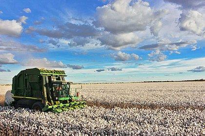 IBGE: Produção agrícola da Bahia foi a que mais cresceu no Brasil