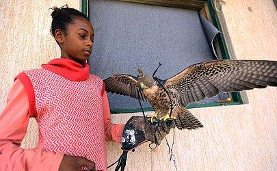 Garota libanesa com um falcão em Tawurgha, 260 kms a leste de Trípoli.  MAHMUD Mahmud TURKIA / AFP)