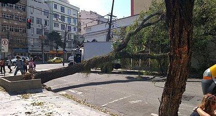Árvore cai e interdita Rua Alves de Brito, na Tijuca, Zona Norte do Rio