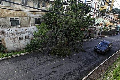 Árvore caiu de manhã nas imediações do Calabar
