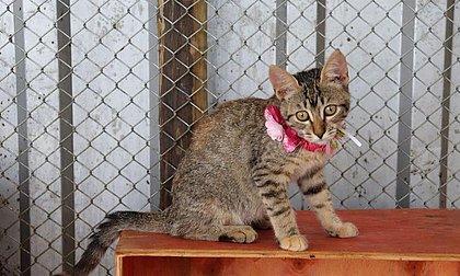 45 pets especiais resgatados em Brumadinho aguardam adoção responsável