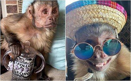 Macaco que tinha 17 milhões de seguidores morre após ir ao veterinário