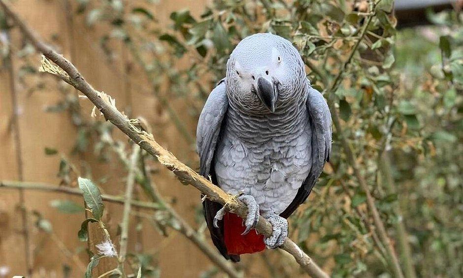 Papagaios ficam de castigo após chamarem diretor do parque de 'cretino'