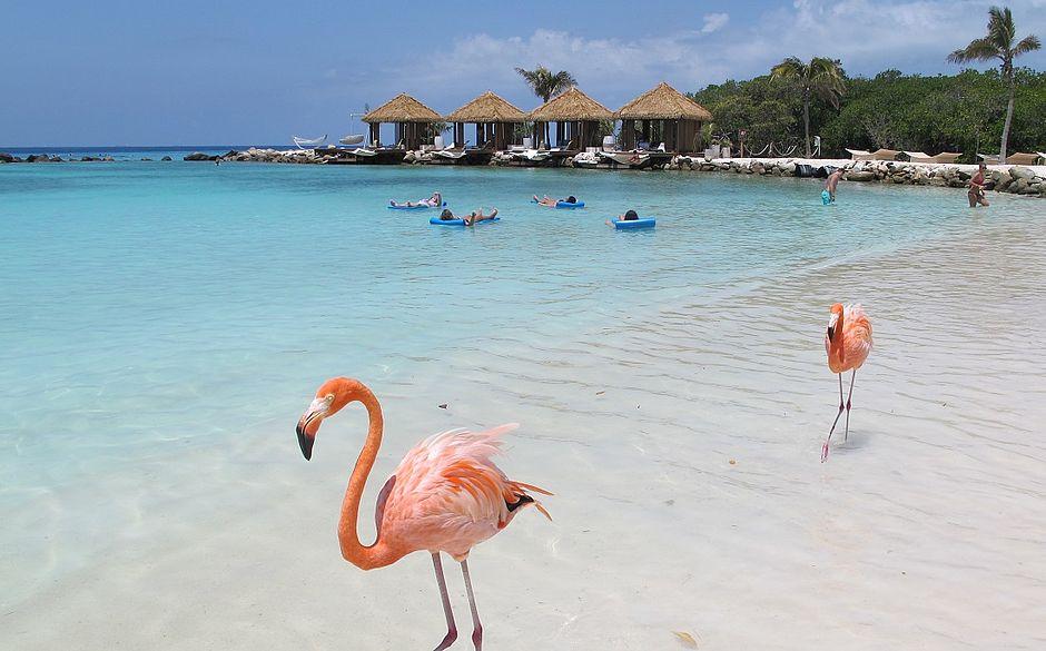 Flamingo na praia? Saiba onde fica e como chegar a este paraíso