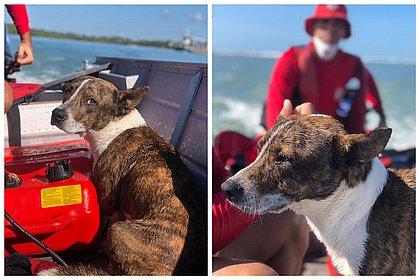 Cachorro cai no mar e é resgatado pelos bombeiros em Porto Seguro