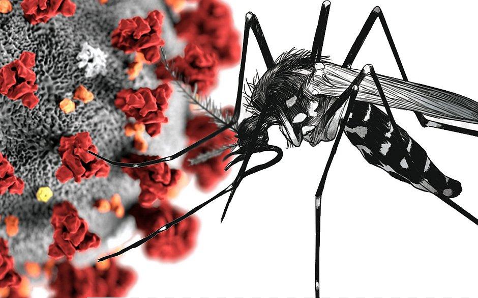 Dengue pode fornecer imunidade para covid-19, aponta estudo