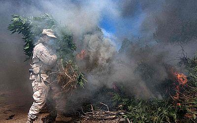 Soldados mexicanos queimam uma plantação de maconha perto da cidade de La Rumorosa em Tecate, estado da Baixa Califórnia, México. Durante a operação, o exército apreendeu um laboratório clandestino de metanfetamina.