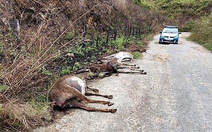 Confinamento de jumentos para abate é proibido em Itapetinga