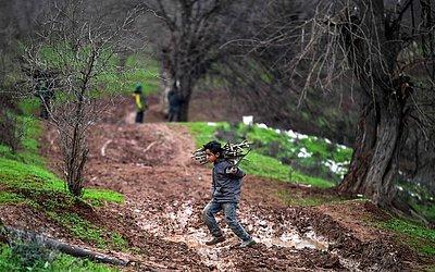 Um menino sírio carrega lenha para o campo de deslocados perto de Dayr Ballut no noroeste da província de Aleppo.